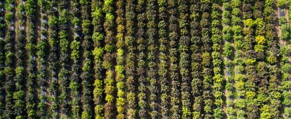 Agricultular field